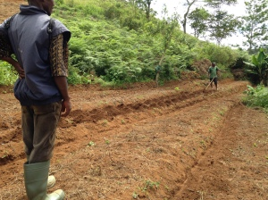 Designating organic farm plots